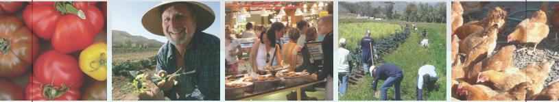 Community Food Assessment banner image