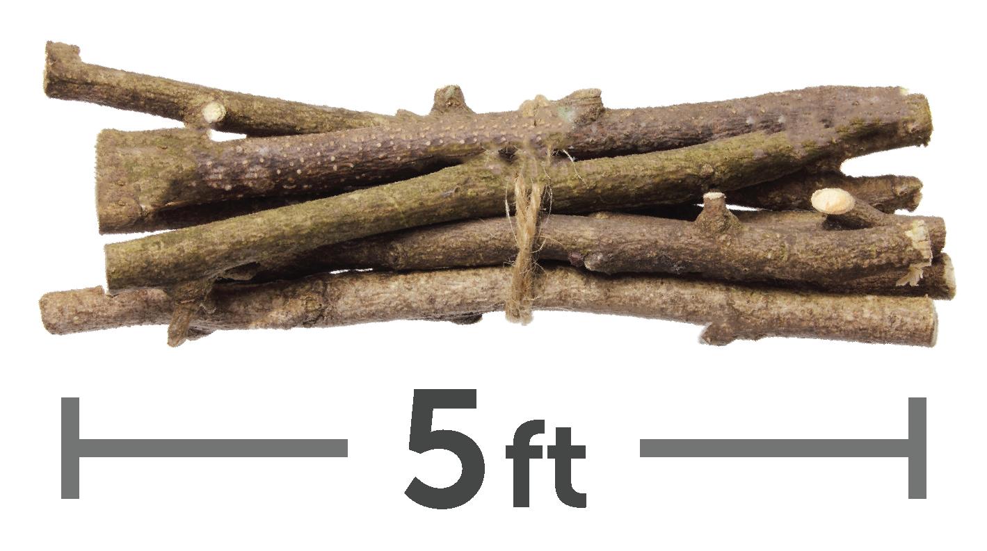 5 ft limbs